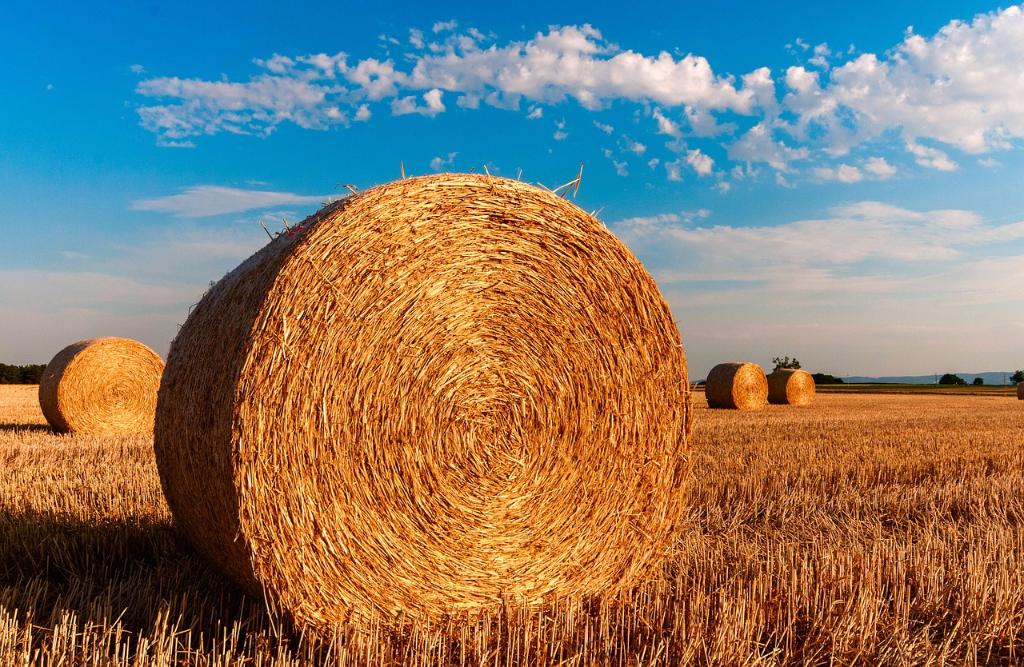 Vivere-l'agricoltura-da-vicino